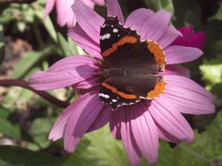 butterfly320